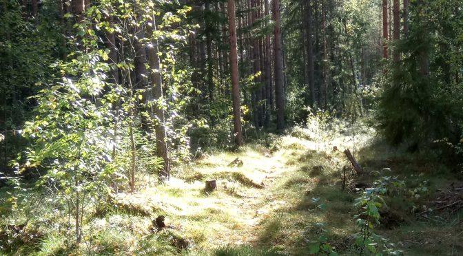 Mentiin metsään