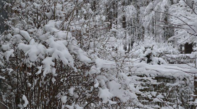 Tammikuu on talvikuu