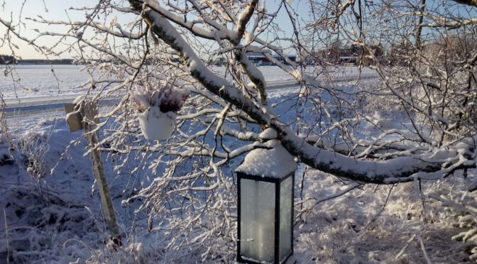 Joulukuu alkoi auringolla ja lumipeitteellä