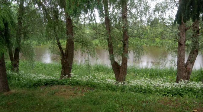 Sadepäivän puutarhapäivitys